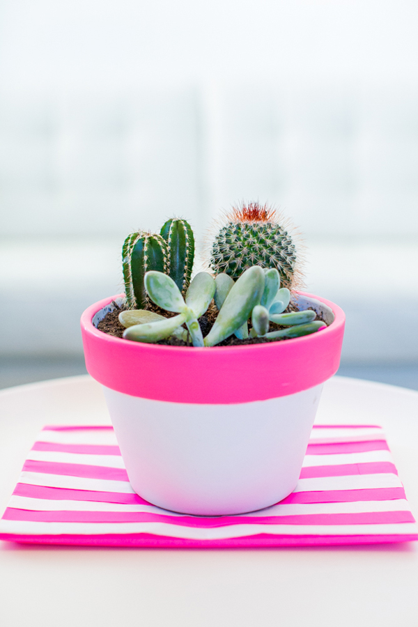 Diy pink cactus pot makeovers house design and decor for Cactus in pots ideas