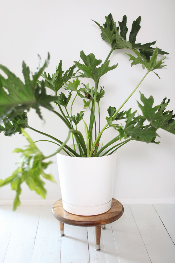 Pot Stand Designs : Diy plant stand pot with mid century ideas house design
