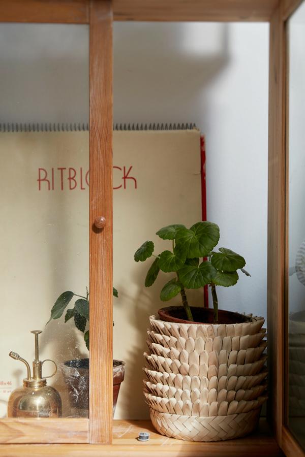 Indoor apartment plants Indoor apartment plants