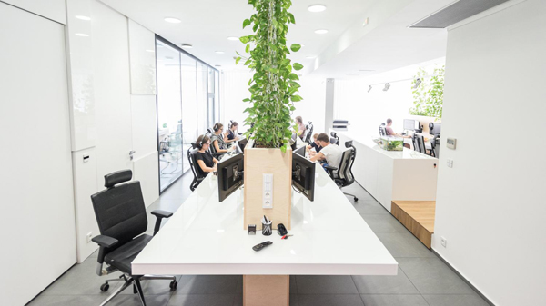 modern office interior with indoor plants - Office Plants