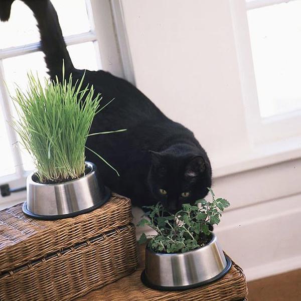 25 Creative DIY Indoor Herb Garden Ideas