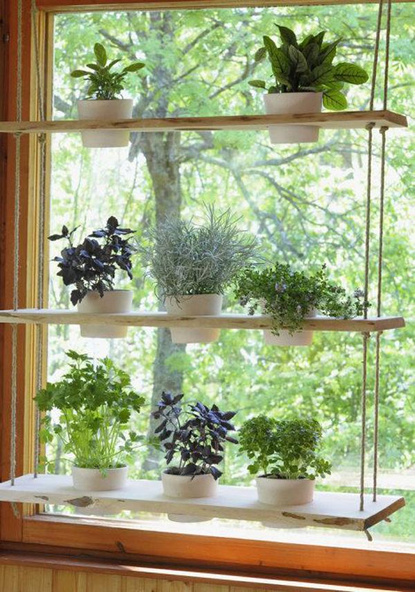 Hanging Indoor Herb Holder In The Window