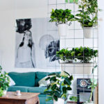 15 Natural Plant Wall Ideas for Room Dividers
