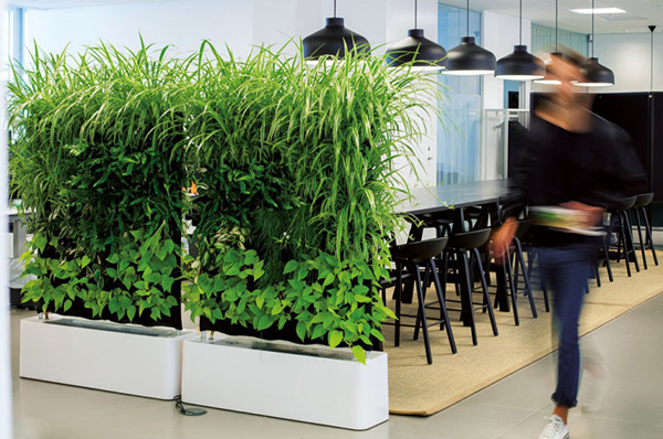 Room Dividers Hanging Plant