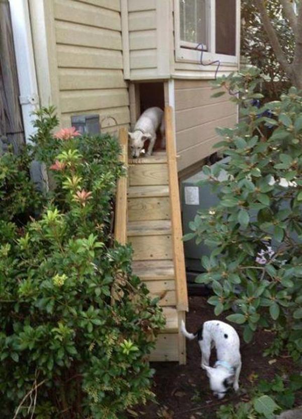 22 Easy DIY Dog Playground Ideas For Small Backyard