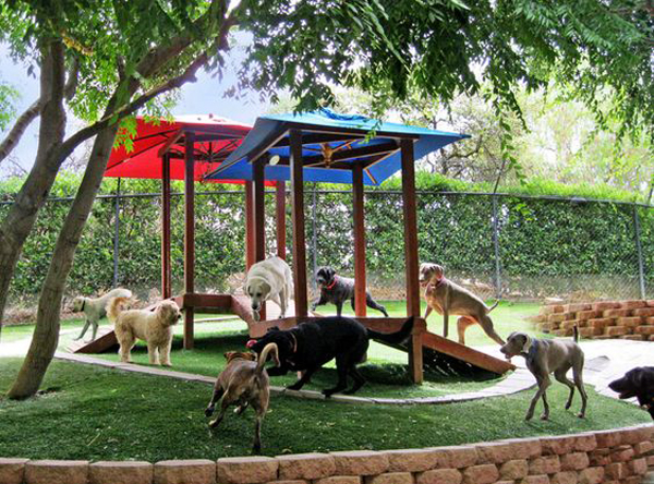 22 Easy DIY Dog Playground Ideas For Small Backyard