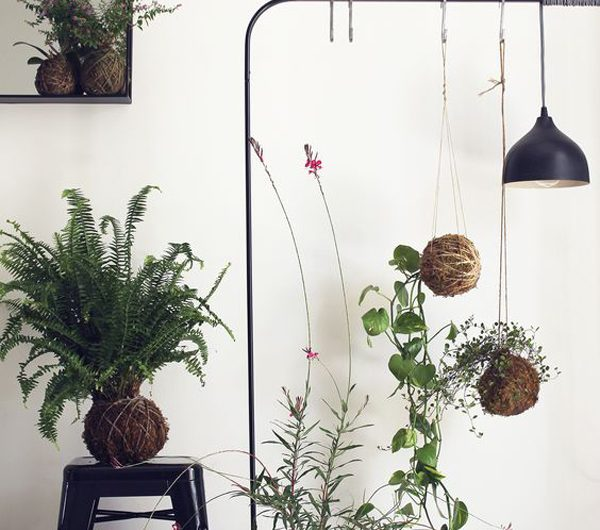 25 Cute DIY Kokedama Ideas To Grow Your Plants
