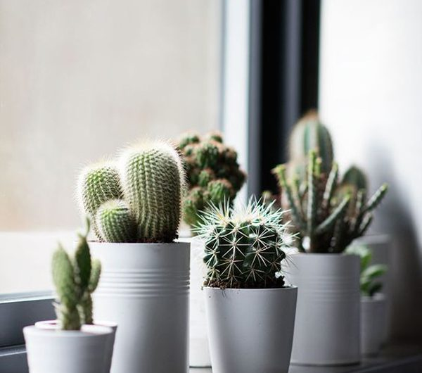 25 Unique Room Ideas With Artificial Cactus