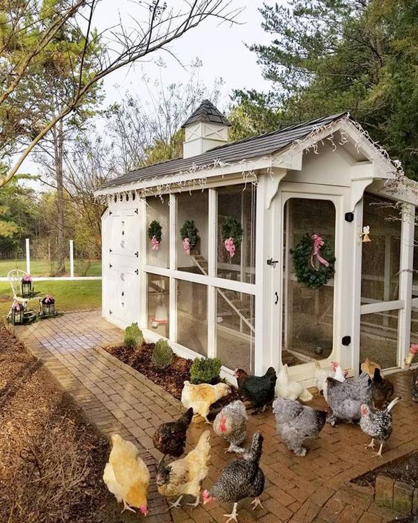 easy-backyard-chicken-coop-plans