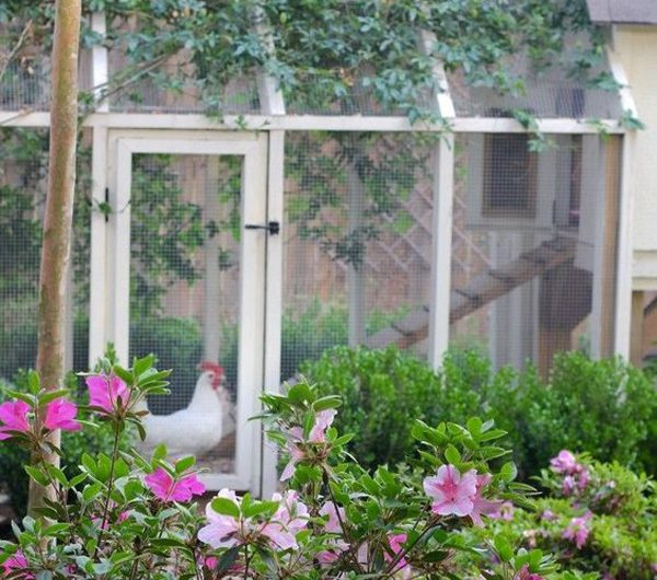 37 Stylish DIY Chicken Coop Ideas For Your Backyard