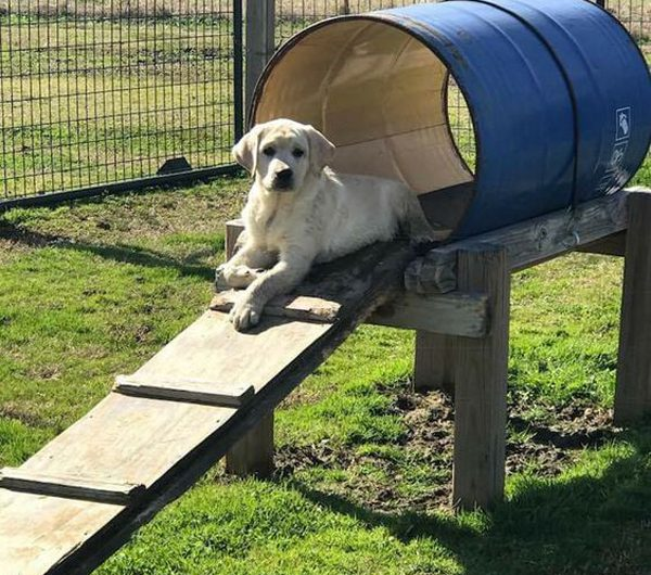 25 Small Dog Playground Ideas That Safe In Backyard