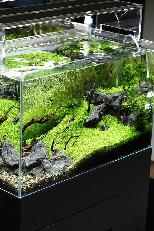 Green Aquascape Design Ideas