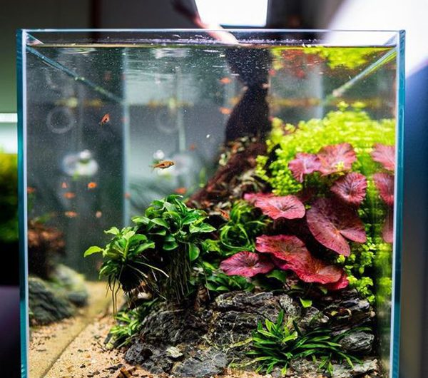 30 Coolest Aquascape Design That Looks Like Real