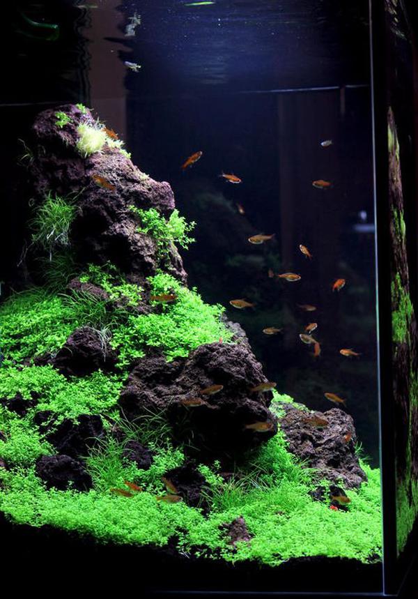 30 Coolest Aquascape Design That Looks Like Real