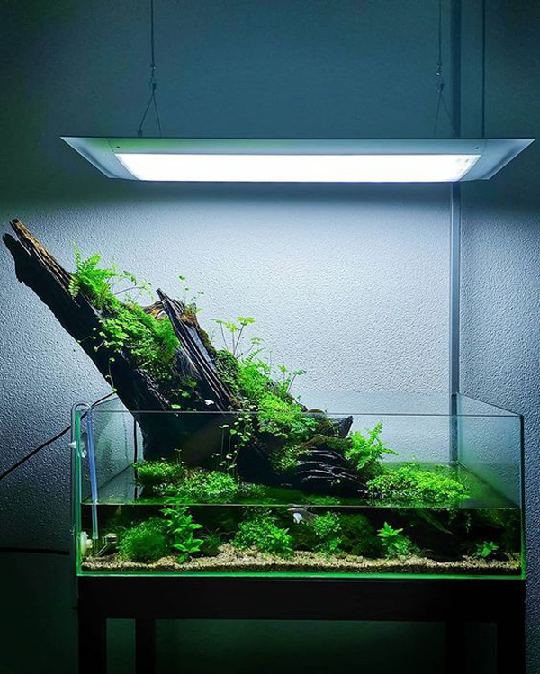 12 Best And Easy-To-Grow Aquascape Plants For Beginners