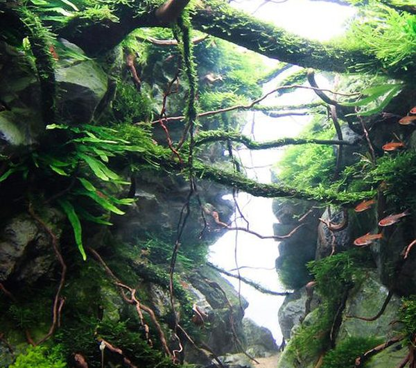 20 Creative Ways To Use Aquascaping Plants For Diorama Look