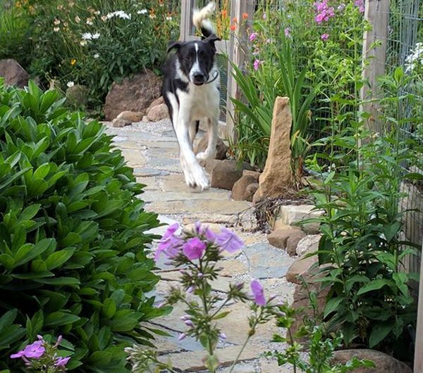 15 Awesome Garden Landscaping That You And Your Dog Will Love