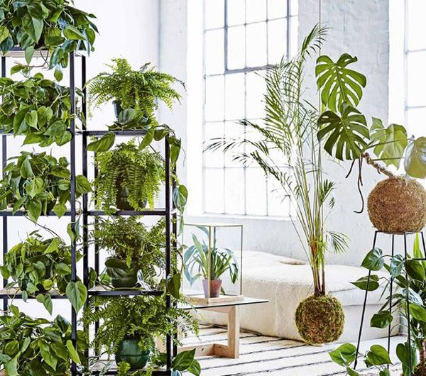 20 Fresh And Natural Plant Dividers For Any Room