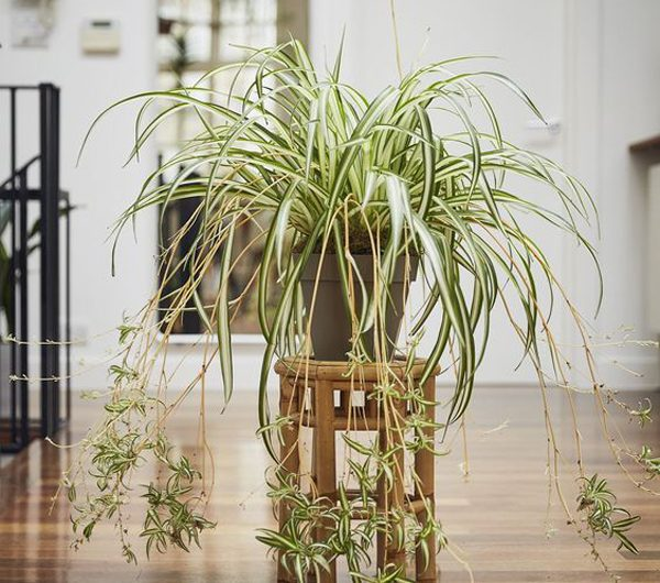 9 Best Plants To Purify The Air In The House