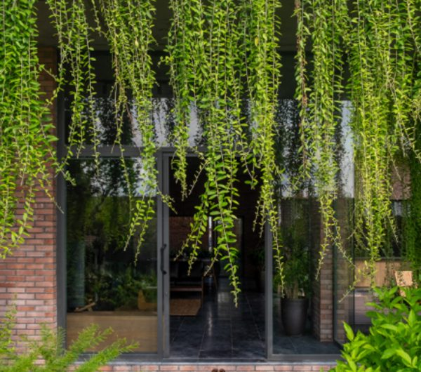 The Green Curtain House: Reflection And Go Back To Nature