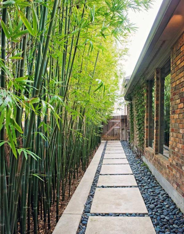 Бамбук-растение-забор-идеи