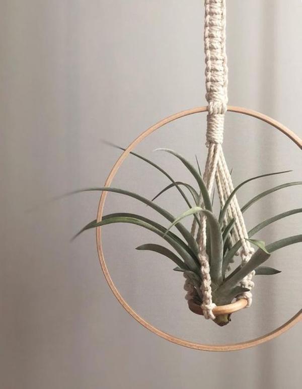 air-plant