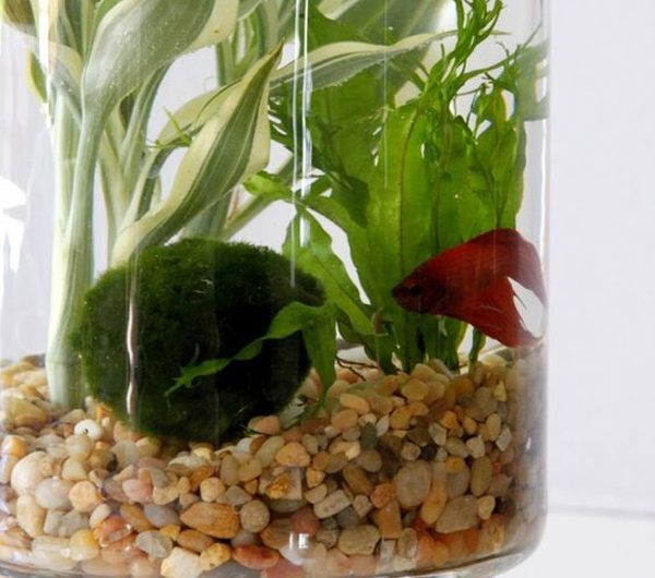 How To Make Mini Aquarium Made From Glass And Vases