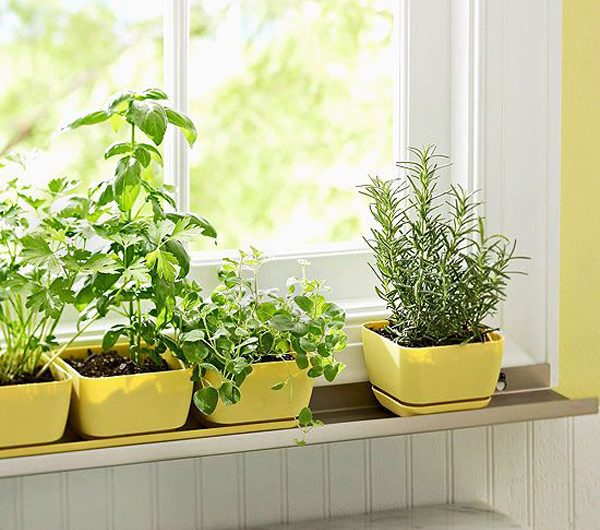 7 Best Herbs Garden Ideas To Grow In Indoor