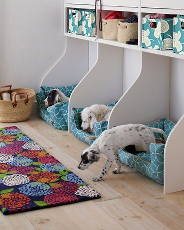 cute-dog-space-for-three