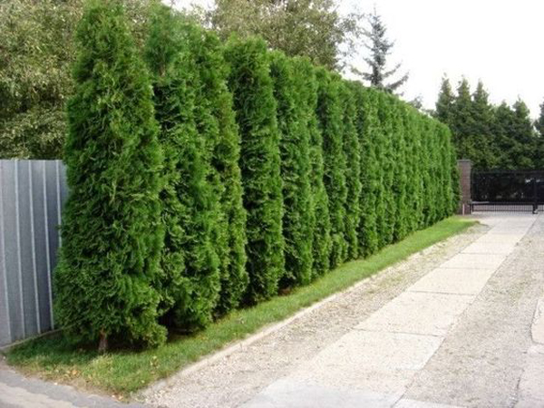cypress-garden-fence-decor