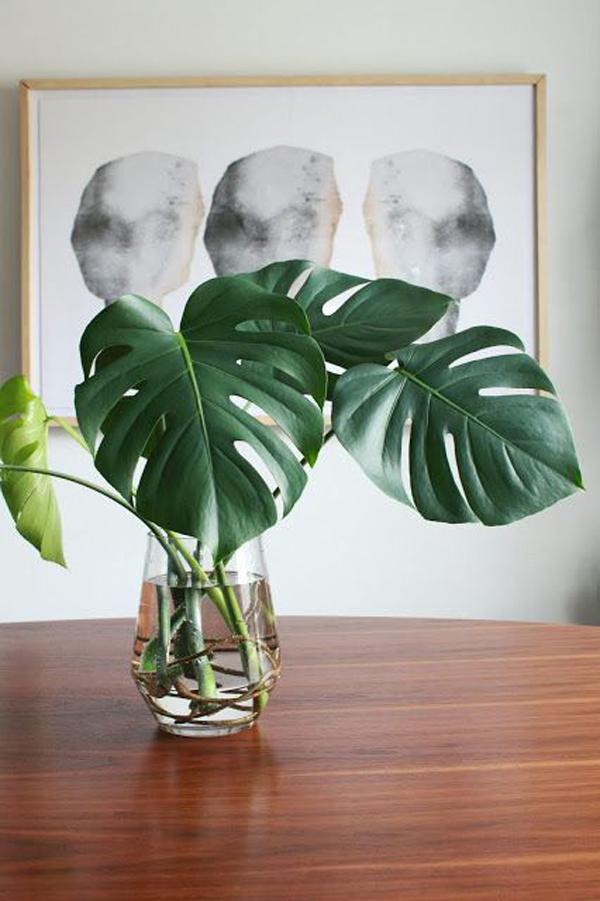 monstera-plant