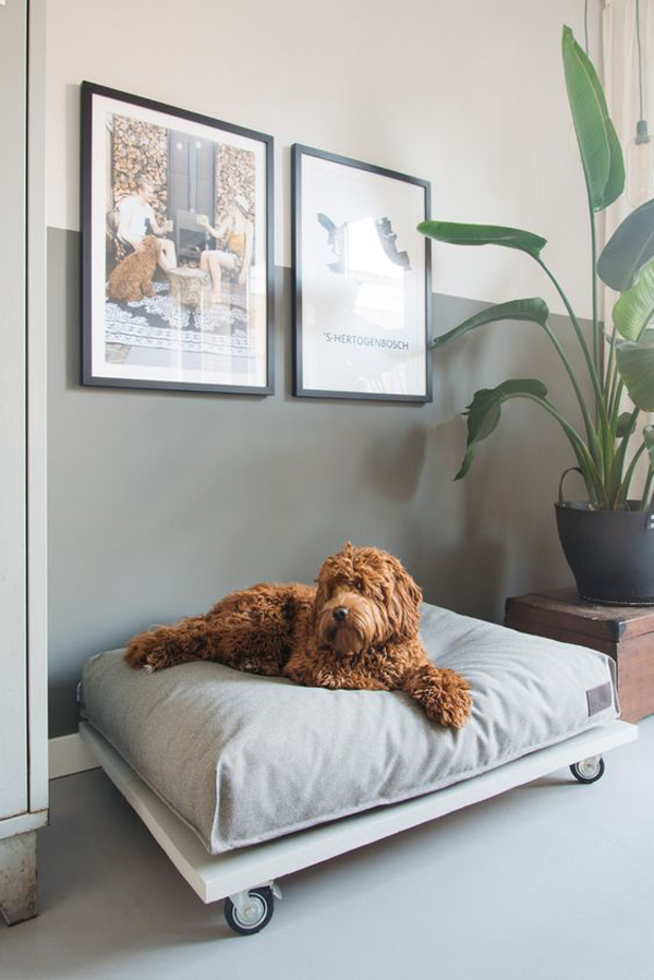 modern-and-cozy-dog-bed-design