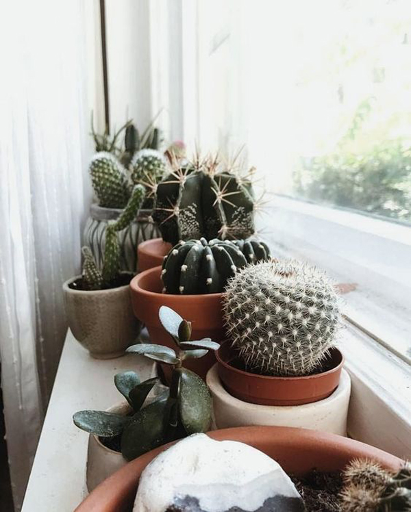 amazing-cactus-decor-in-the-window