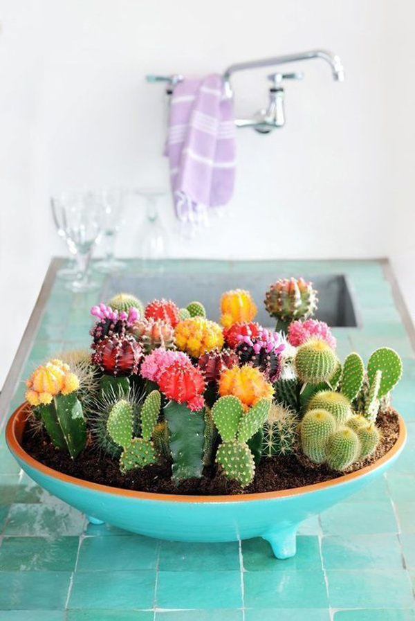 beautiful-cactus-bowl-for-kitchen