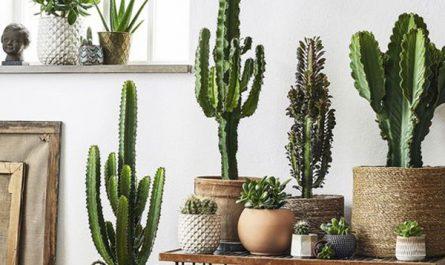 corner-cactus-stand-plant-decor