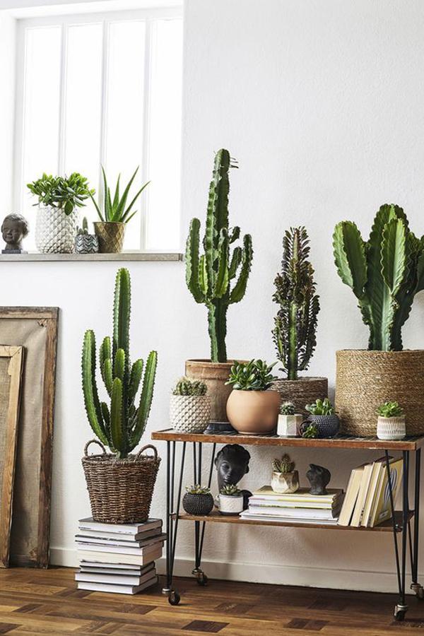 10 Inspiring Indoor Cactus Plants That Easy