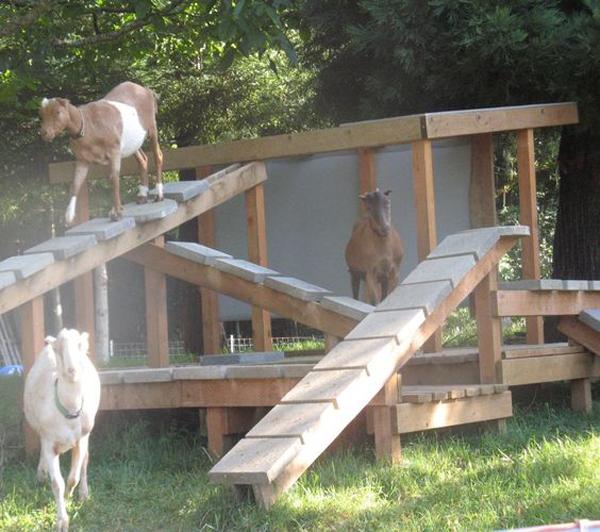 dreamy-goat-farm-with-playground
