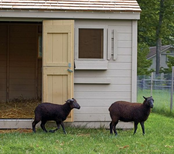 How To Make Awesome Goat House And Playground