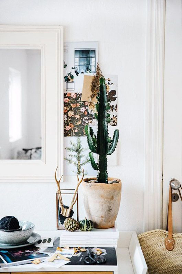 pretty-cactus-display-ideas
