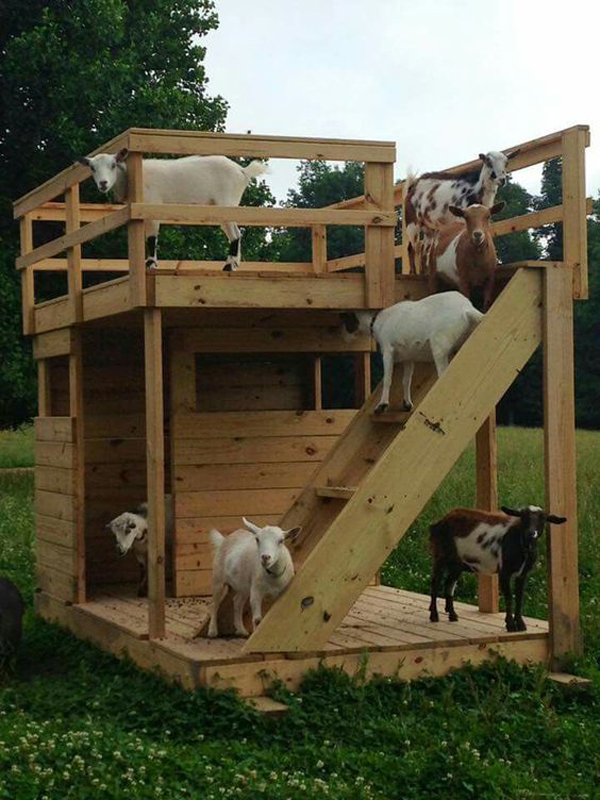 wooden-dog-playhouses