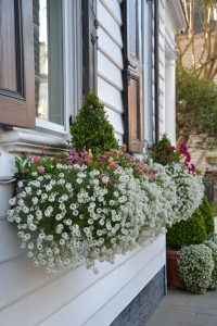 beautiful-and-blooming-window-boxes