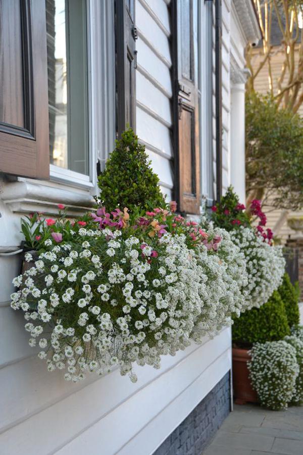 красивые и цветущие окна-коробки