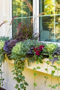 beautiful-summer-window-flower-box