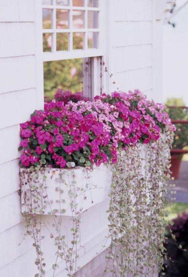 красивый-окно-ящик-контейнер-сад