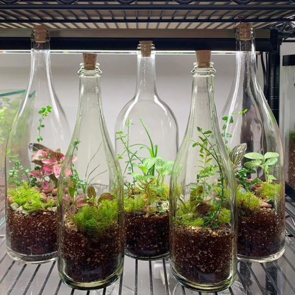 diy-wine-bottle-terrariums