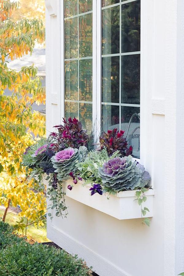 пурпурно-бордовые-окна-цветочные коробки