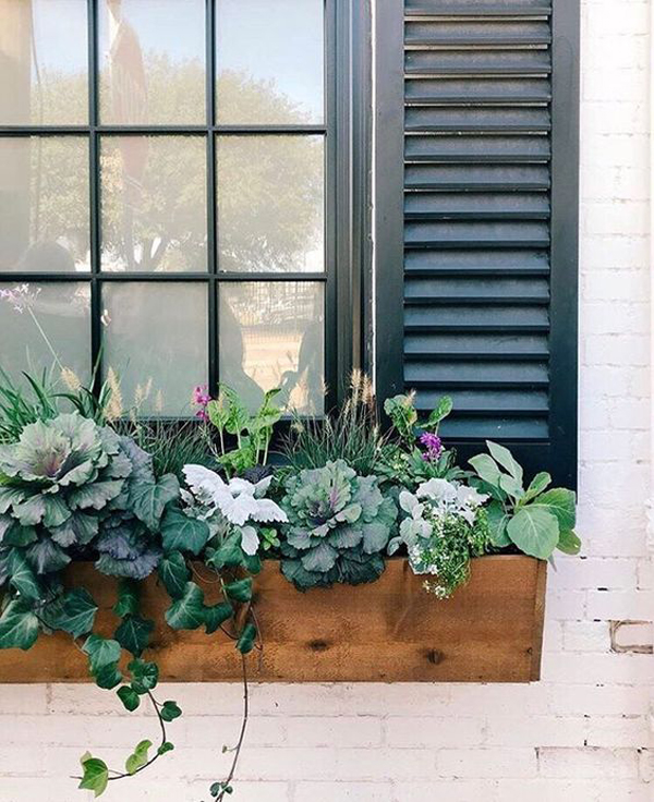 дерево-окно-цветочная коробка-идеи