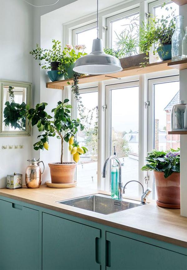 indoor-kitchen-plants-ideas