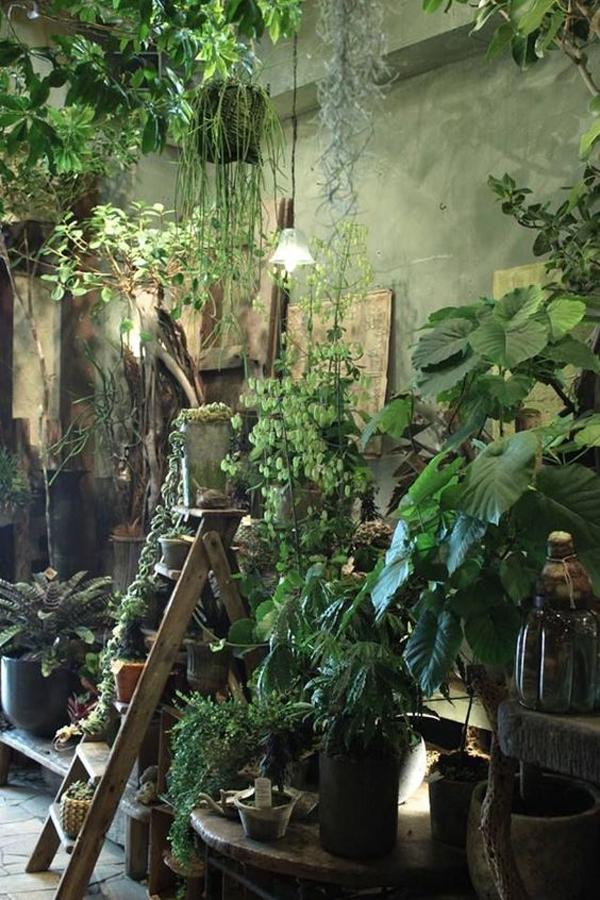 indoor-urban-jungle-house