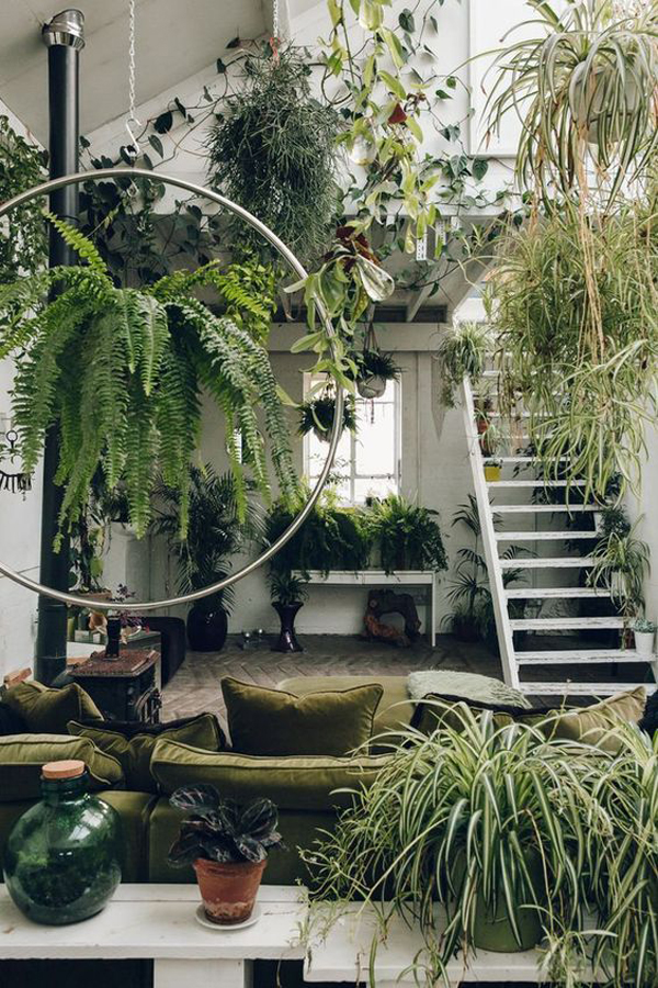 jungle-interior-with-hanging-plants